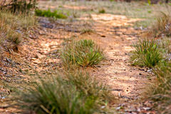 Grass growing on dirt road Royalty Free Stock Photo