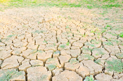 Grass growing on drought field, drought land Royalty Free Stock Photo