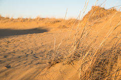 Grass growing on the edge of the desert, Spirit Sands Park, Mani Stock Photos