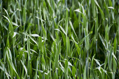 Grass growing on a field Stock Photos