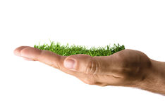 Grass Growing in Hand royalty free stock photography