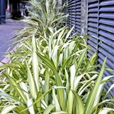 Grass growing within an industrial estate Royalty Free Stock Photo