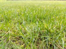 Grass. Growing grass nurture spring Royalty Free Stock Images