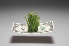 Grass Growing Through One Dollar Bill Royalty Free Stock Image