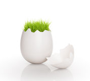 Grass growing out of an egg. Royalty Free Stock Photos
