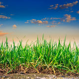 Grass growing out of stone Royalty Free Stock Image