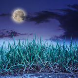 Grass growing out of stone at night Royalty Free Stock Photos