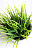 Grass growing in a pot Royalty Free Stock Photography