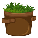Grass growing in the pot. Illustration Stock Photos