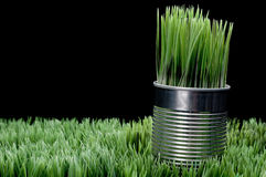 Grass growing from a recycled aluminum can Royalty Free Stock Photos
