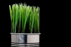 Grass growing from a recyled aluminim can Stock Images