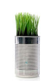 Grass growing from a recyled aluminum can Stock Photo