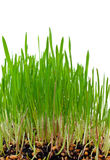Grass growing from the roots Stock Photo