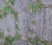 Grass growing between the rough stones paving Royalty Free Stock Photography