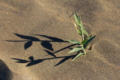 Grass growing in the sand Stock Photos