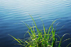 Grass growing at the shore Royalty Free Stock Photos