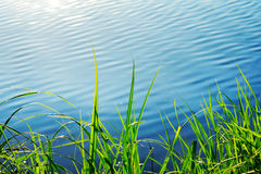 Grass growing at the shore Stock Photos