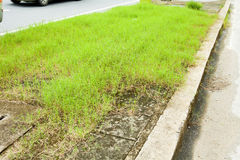 Grass growing on sidewalk Stock Images