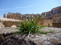 Grass growing at the stone in the amphitheatre El Jem Stock Images