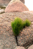 Grass growing on the stone. Stone like a lying woman Royalty Free Stock Images