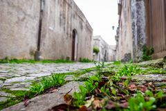 Grass growing on stone road in the old europe town. Grass growing on cobblestone road in the old medieval europe town royalty free stock image