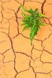 Grass growing trough dry soil cracks Stock Photography