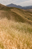 Grass growing on Wither Hills Royalty Free Stock Images