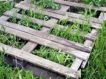 Grass growing through wooden planks Stock Photography