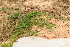 Grass growining Stock Photography