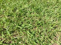 Grass grown Royalty Free Stock Photos