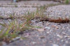 Grass grows on asphalt royalty free stock photos