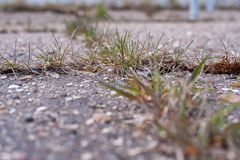 Grass grows on asphalt royalty free stock images
