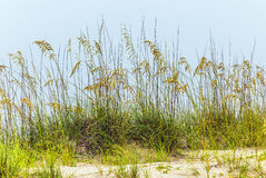 Grass  grows at the beach in Sand Royalty Free Stock Photos