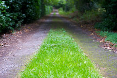 Grass grows on Country Lane Stock Photography