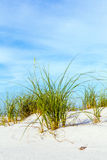 Grass grows at dune at a beautiful beach Royalty Free Stock Images