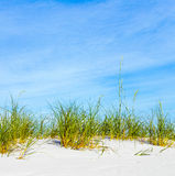 Grass grows at dune at a beautiful beach Royalty Free Stock Image