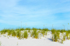 Grass grows at dune at a beautiful beach Stock Images