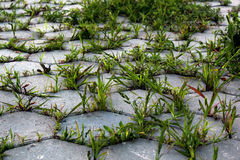 Grass grows on the pavement. background image.  Royalty Free Stock Image