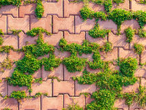 The grass grows between the paving slabs. Texture. Background Stock Photo