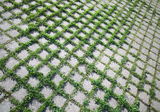 Grass grows through the road paving Stock Photo