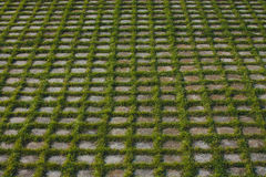 Grass grows through the tiles Royalty Free Stock Image
