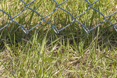 Grass Grows Under Fence Royalty Free Stock Photography