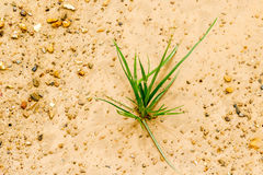 The grass grows up lonely as a business concept starting develop royalty free stock image