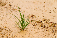 The grass grows up lonely as a business concept starting develop stock images