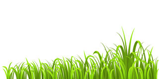 Grass growth Royalty Free Stock Photography