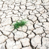 Grass growth through out dried cracked mud. Background Royalty Free Stock Photography