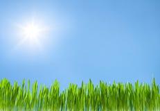 Grass growth on sky blue with sun Stock Photos