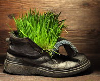 Grass in grunge boot Stock Images