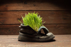 Grass in grunge boot. Green grass in grunge boot Stock Photos