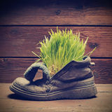 Grass in grunge boot Stock Photography